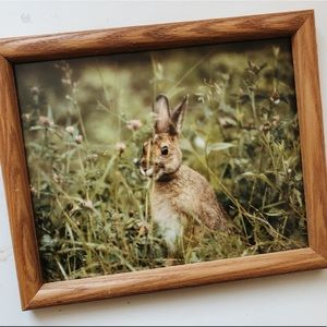 VINTAGE Wooded Framed Field Bunny Photograph